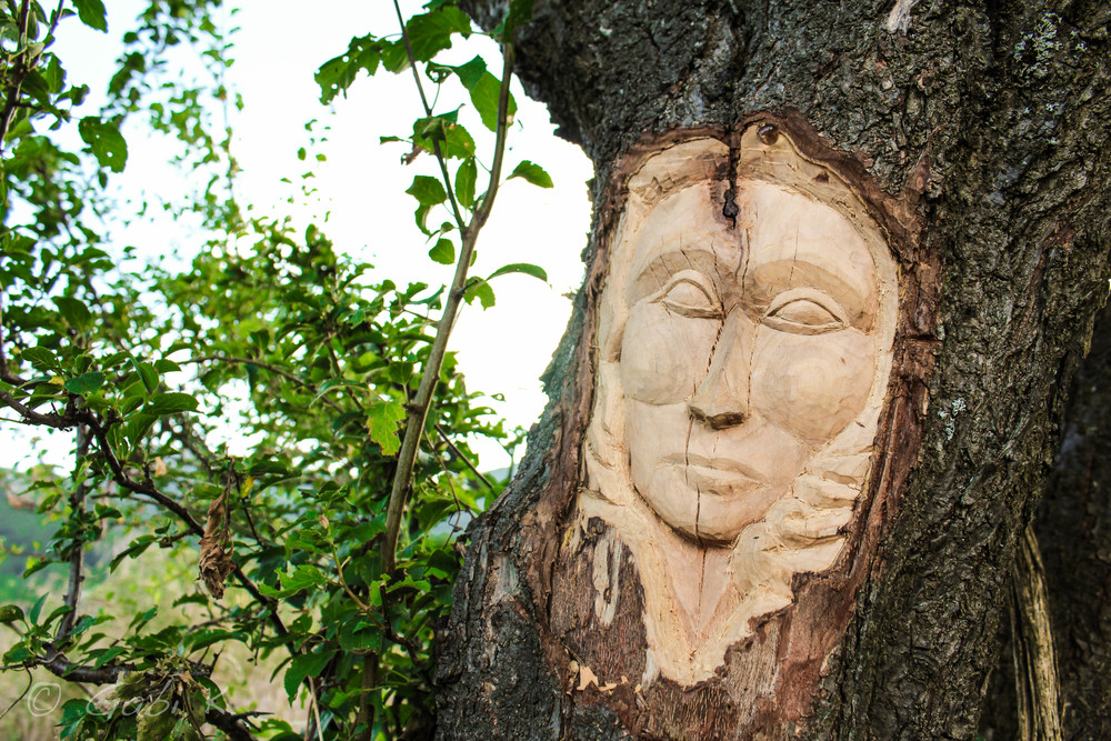Some art on a tree even up here...