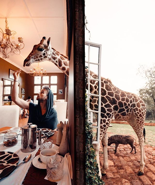 "Breakfast with some new giraffe friends on my recent Trip to Kenya. 🦒🦒🦒 Did you know Giraffes have recently been classified as critically endangered? Can't imagine a world without these incredibly beautiful animals, and all the other endangered animals out there. Thankfully Giraffe manor, a part of the Safari Collection actively work in animal conservation and do their part in educating guests about what they are doing to help combat the extinction of several species in Africa. ""The Safari Collection takes into consideration its impact at all levels. Our hands on conservation team is committed to protecting, maintaining and enhancing the incredible landscapes in which we work, in order to support the long term vision of The Safari Collection and to preserve the wilderness for future generations."" ❤️❤️❤️"