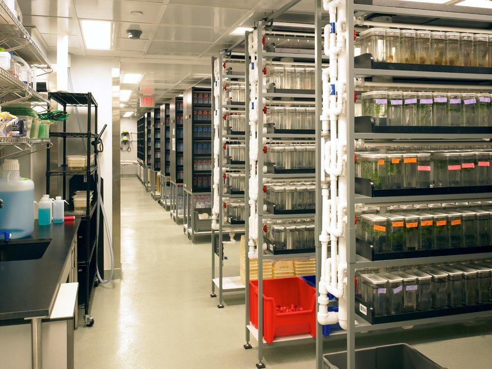 Harvard | Zebrafish Facility