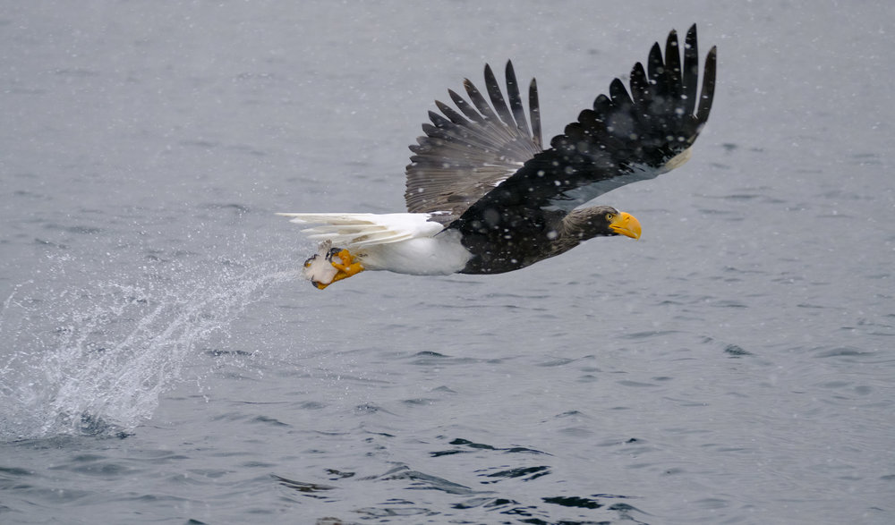 The large buffer allowed me to track eagles from diving all the way to catching. - XF 100-400mm