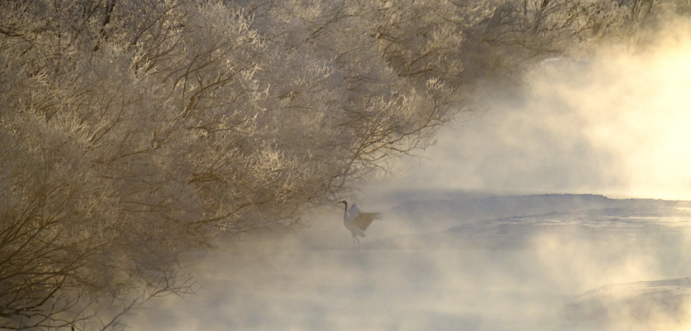 Crane through the hoar frost