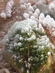 icesculpture - 7.jpg