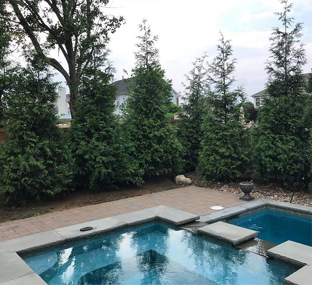 6 large Green Giants planted poolside over the weekend. Instant privacy. #landscaping #landscapecontractor #planting #landscapedesign #arborvitae #greengiant #hawklandscaping 🦅