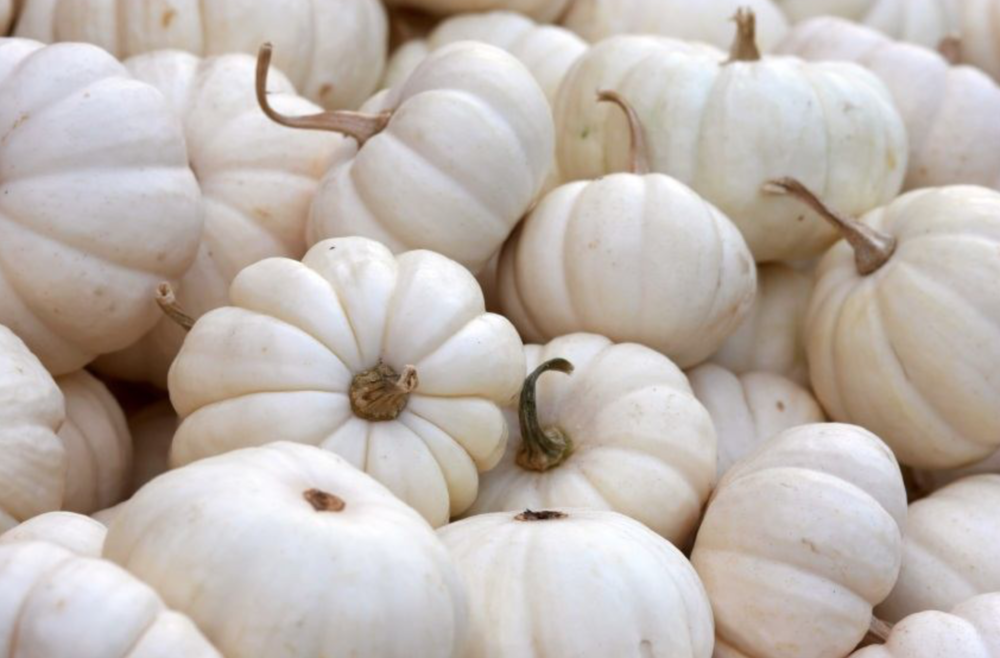 Your guide to pumpkins is  here.