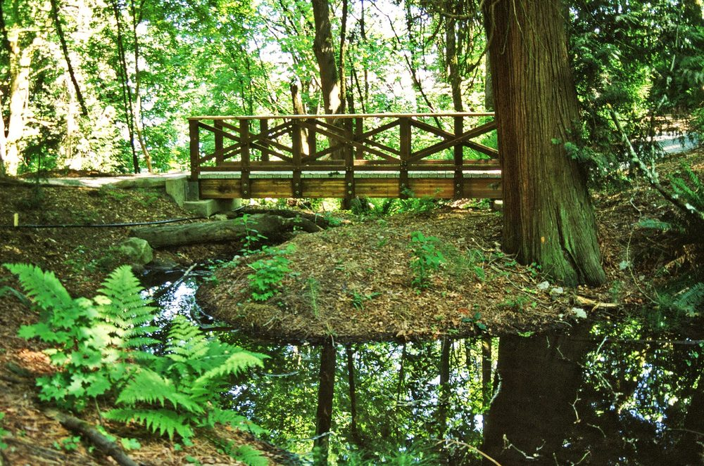Madrona Woods Restoration, Seattle, WA  1998 - Present