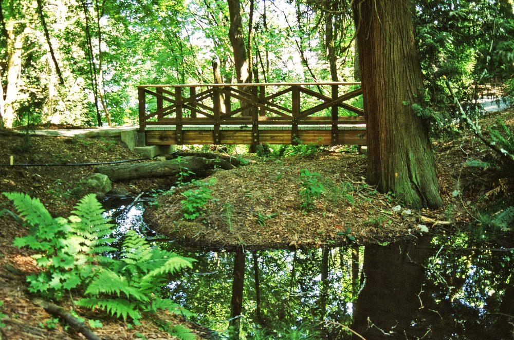 Madrona Woods Restoration, Seattle, WA  1998 - Present