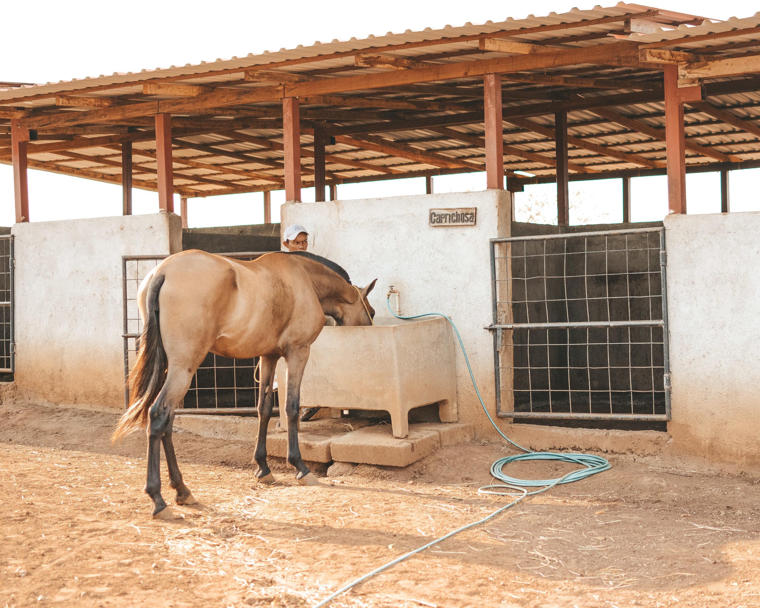 Horseback riding to Laguna de Apoyo