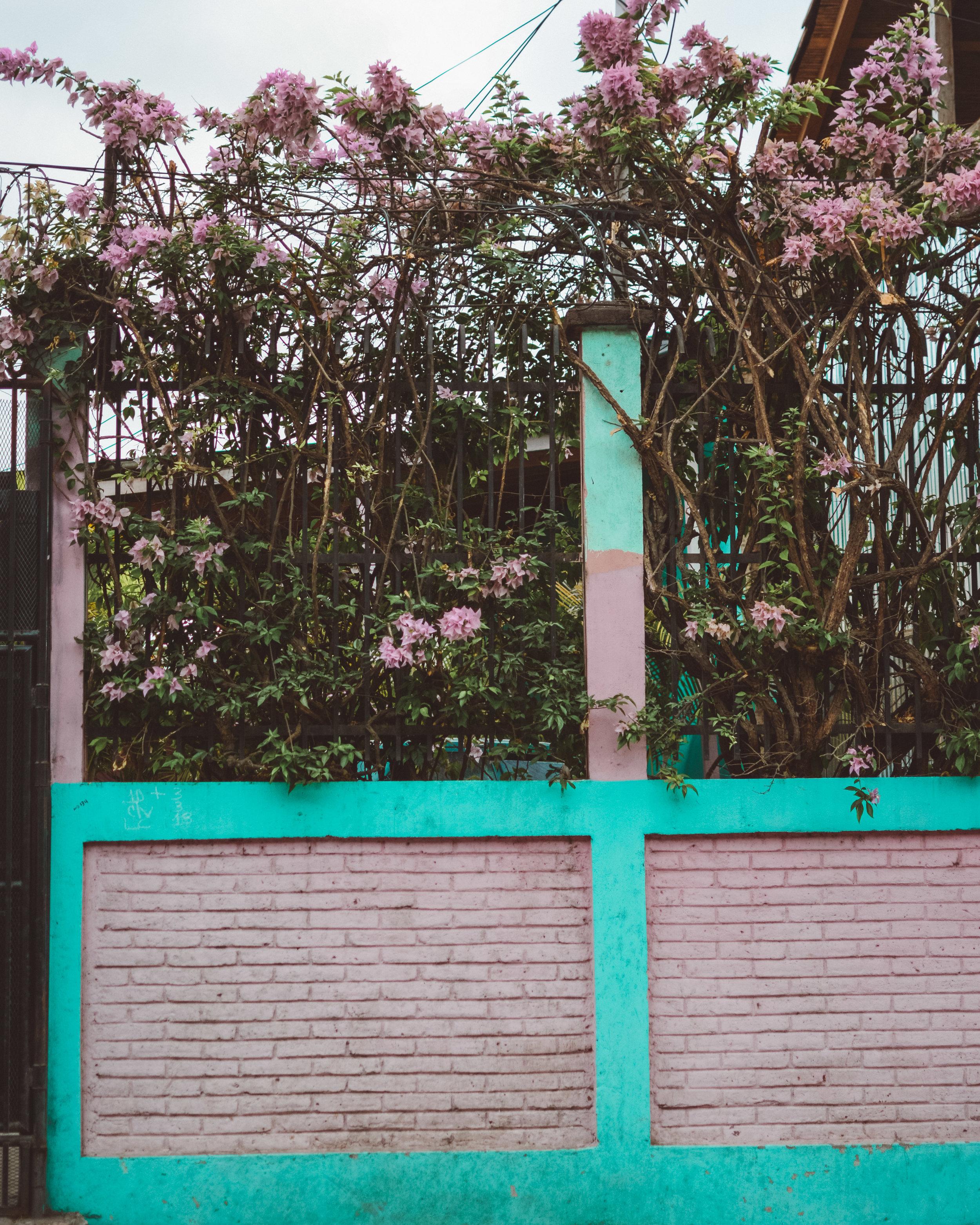 Granada in bloom