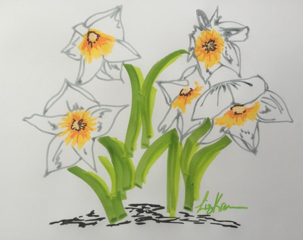 Pretty daffodils on a beautiful spring day.
