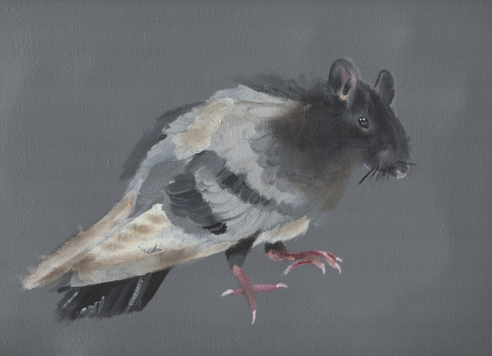 pigeon rat