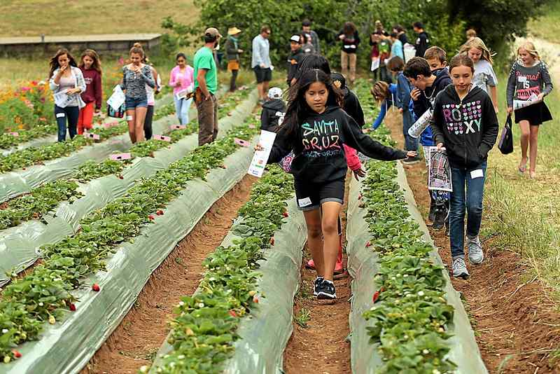 'Food, What?!' Strawberry Blast teaches teens about health and food justice - By: Ben Scott of the Santa Cruz Sentinel