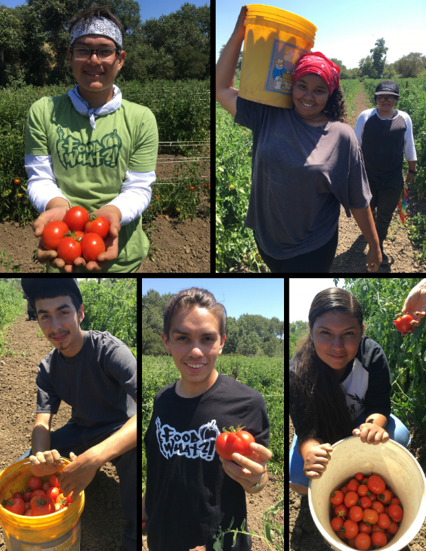 Harvesting the bounty. Pride in work. Nourishing selves, family, and community.