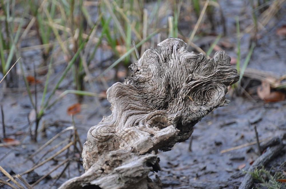 drift-wood-958160_1920.jpg