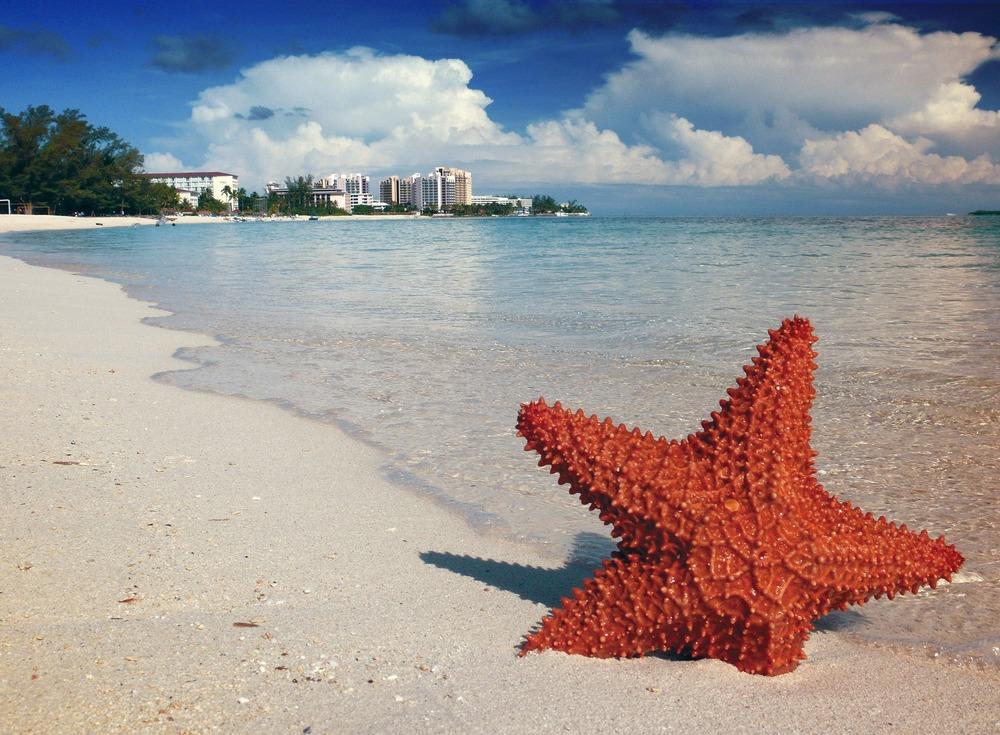 starfish-1122849_1920.jpg