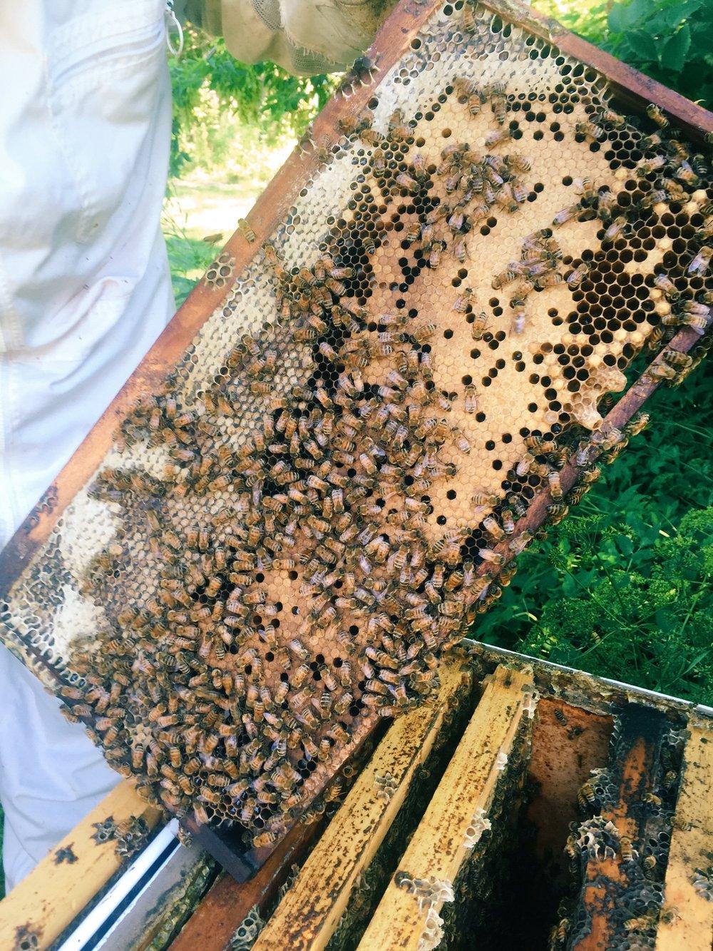honey bees u2014 detroit abloom