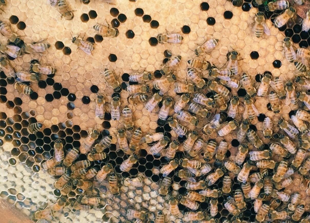Honey Bees — Detroit Abloom