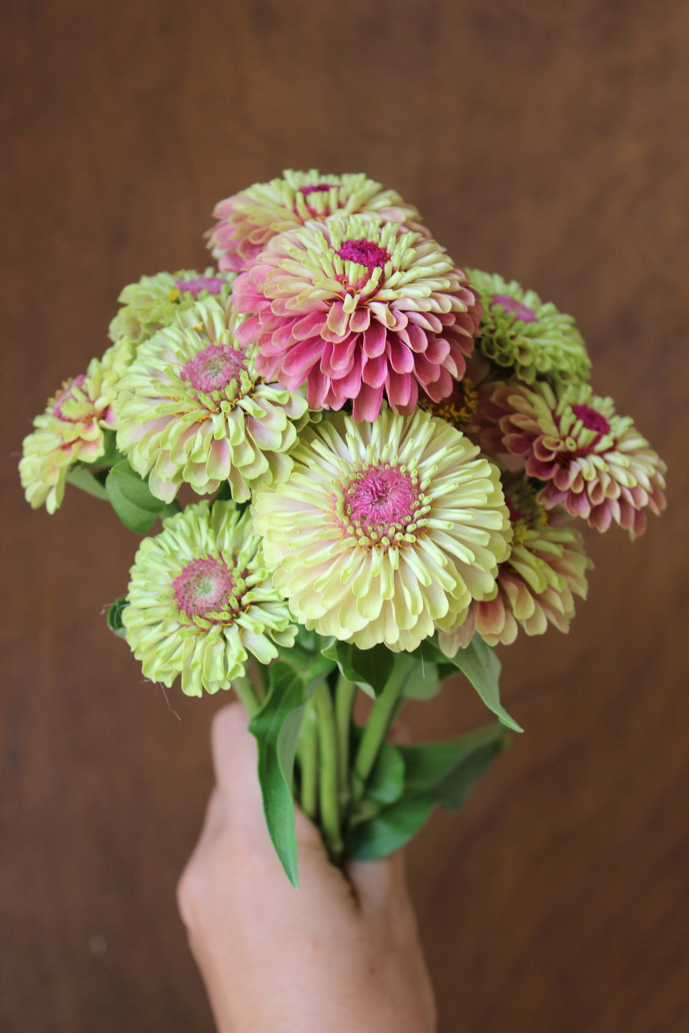 Zinnias - Variety of Colors