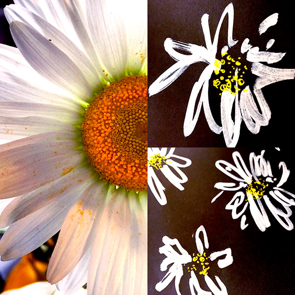 albaquirky_daisy.jpg