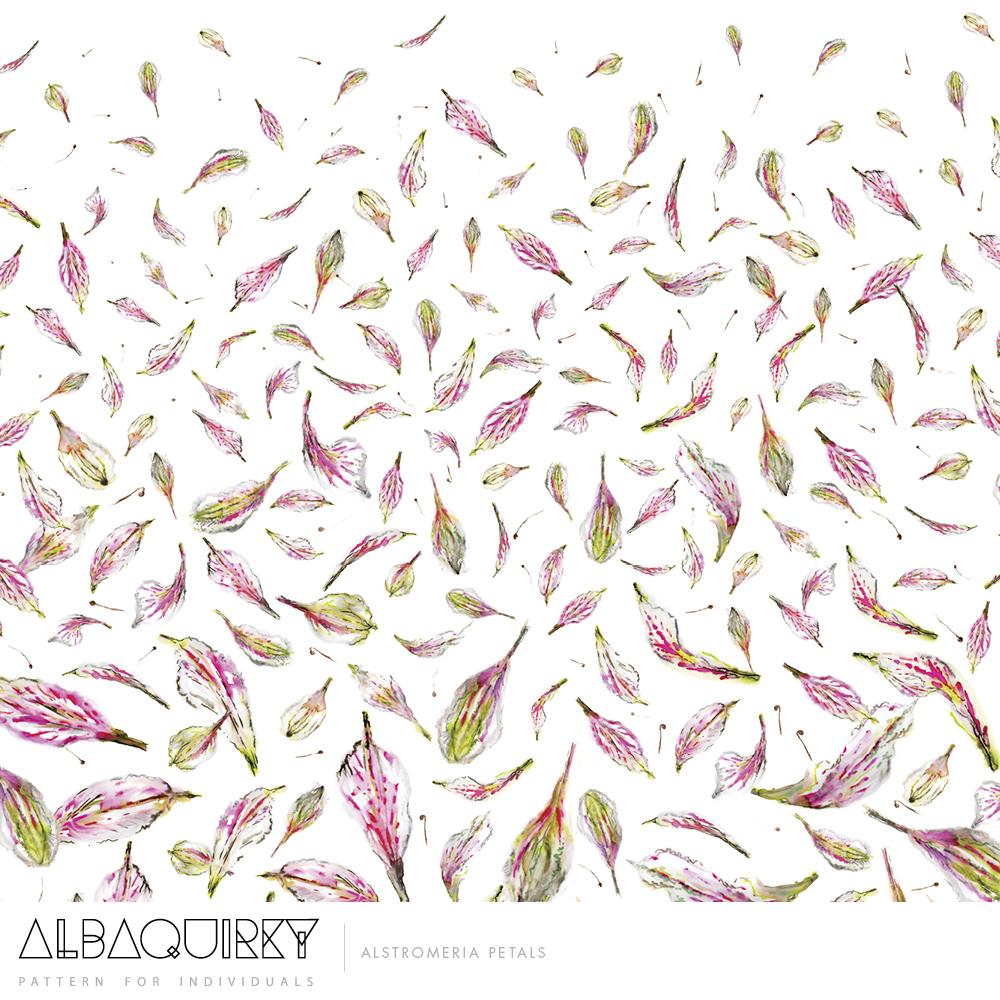 albaquirky_alstromeria_petals.jpg