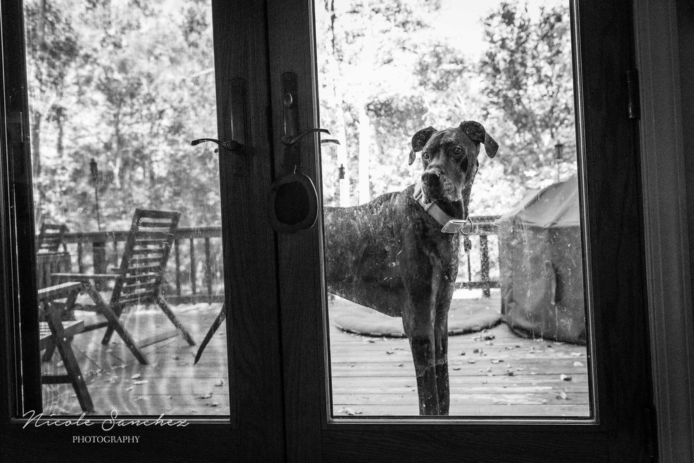 Dog outside staring in window in Alexandria, VA by Family Photographer Nicole Sanchez