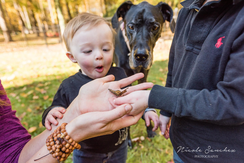 Toddler boy looking at butterfly in Mom's hand in Northern Virginia by Family Photographer Nicole Sanchez