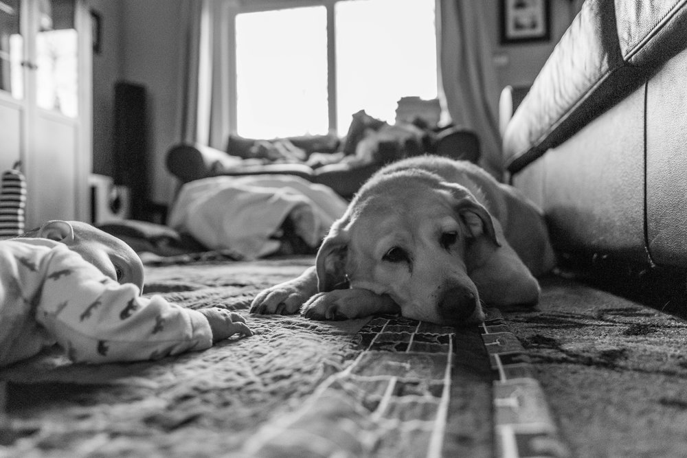 baby-lying-on-floor-next-to-family-dog-by-Northern-Virginia-Family-Photographer-Nicole-Sanchez
