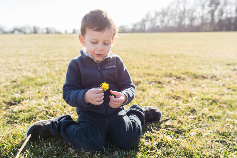 boy-holding-dandelion-flower-field-by-Northern-Virginia-Family-Photographer-Nicole-Sanchez