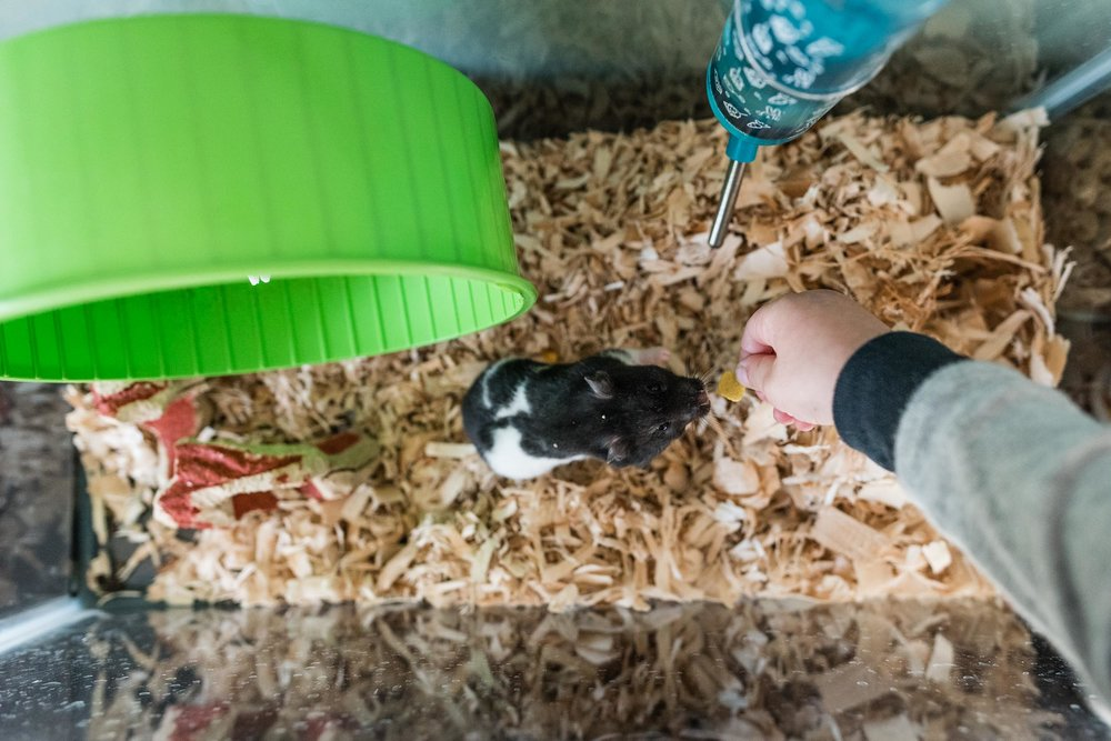 Boy feeding pet hamster by hand in Alexandria, VA by Family Photographer Nicole Sanchez