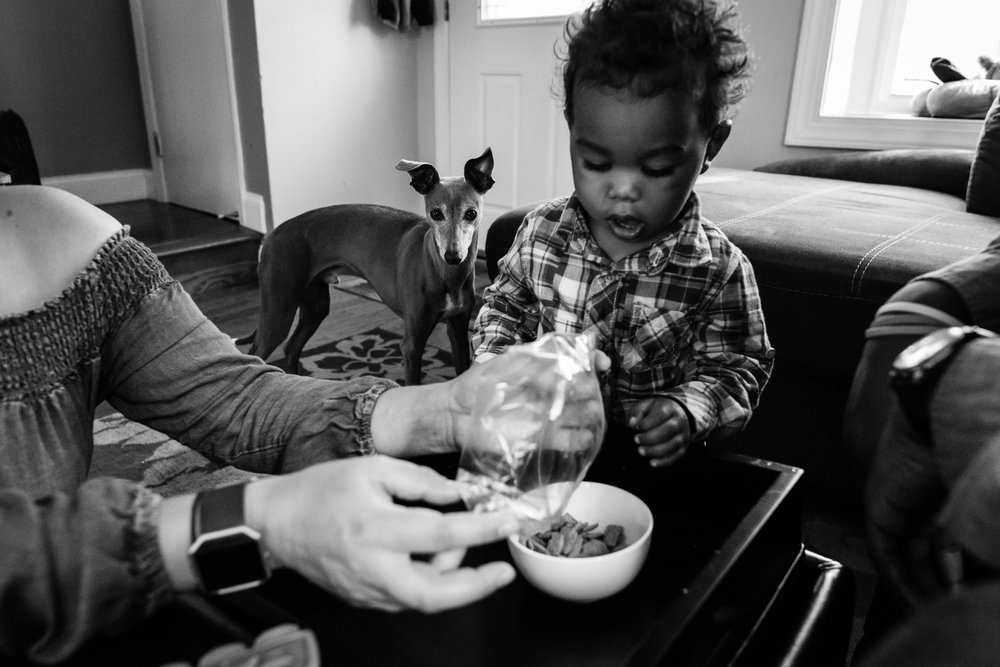 Toddler boy having a snack while pet dog begs by Northern Virginia Family Photographer Nicole Sanchez