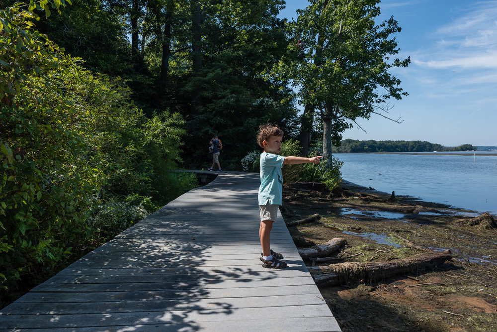 boy pointing at potomac river by northern virginia family photographer nicole sanchez