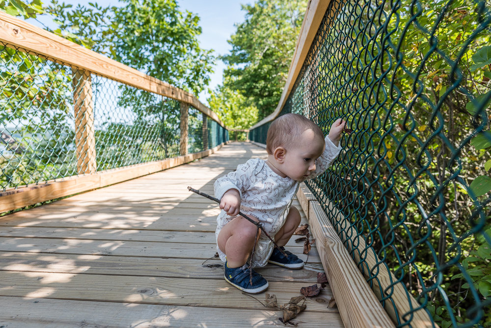 baby looking through fence on nature walk in northern virginia by nicole sanchez photography
