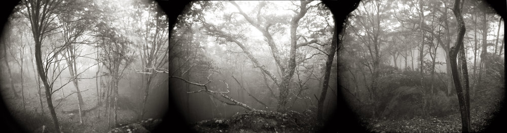 FOREST IN THE CLOUDS  FROM TOME OF MEMORY  TEA TONED GELATIN SILVER TRIPTYCH