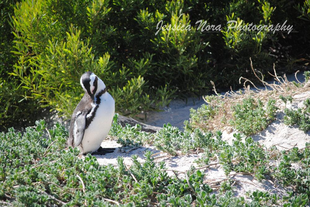 PenguinWM01.jpg