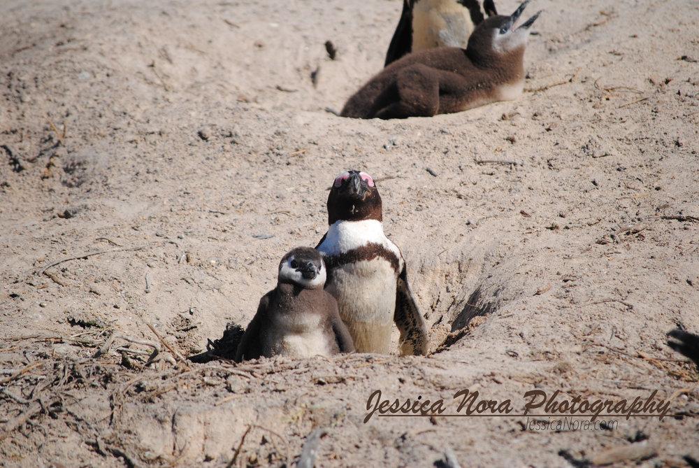 PenguinWM04.jpg