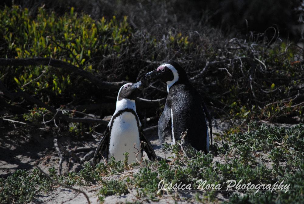 PenguinWM05.jpg