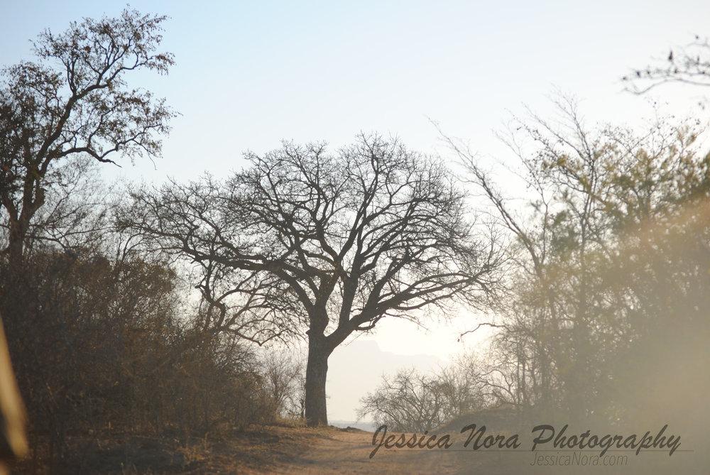 TreeWM01.jpg