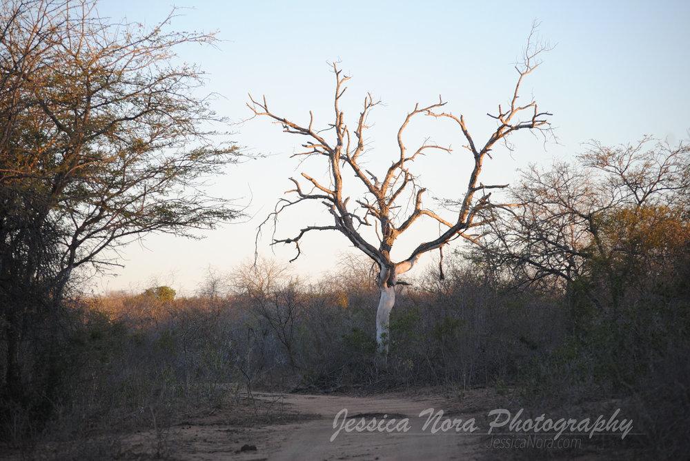 TreeWM03.jpg