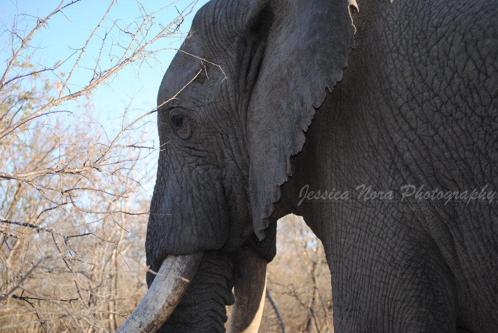 ElephantWM01.jpg