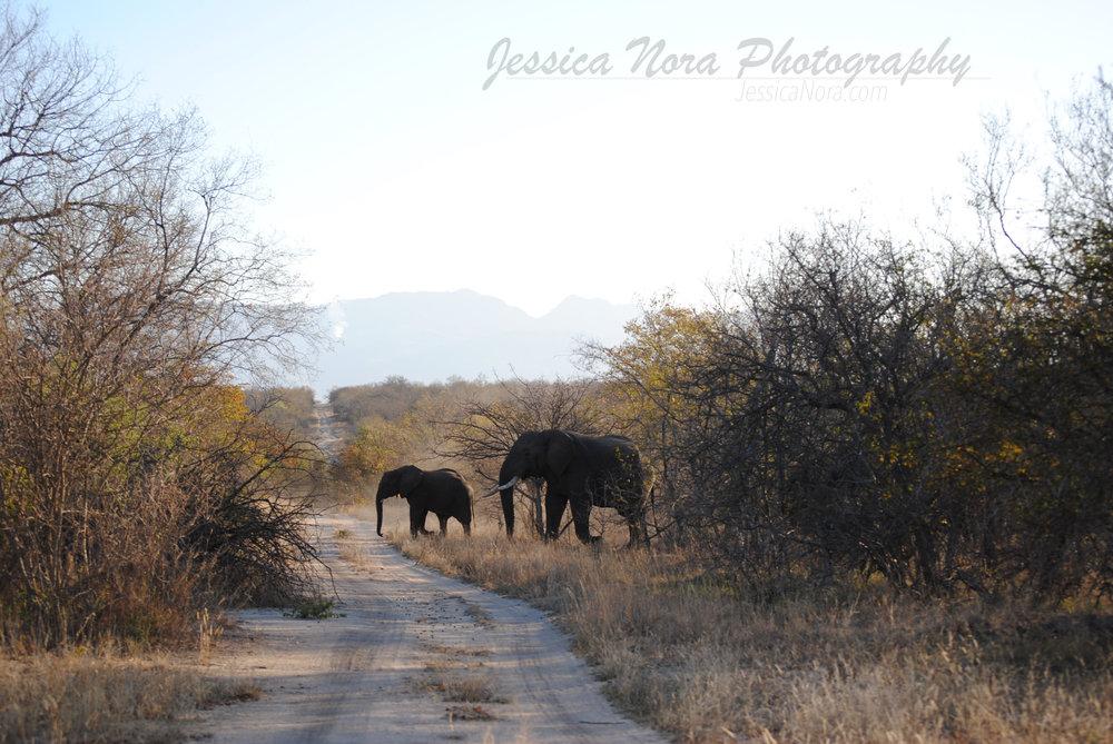 ElephantWM02.jpg