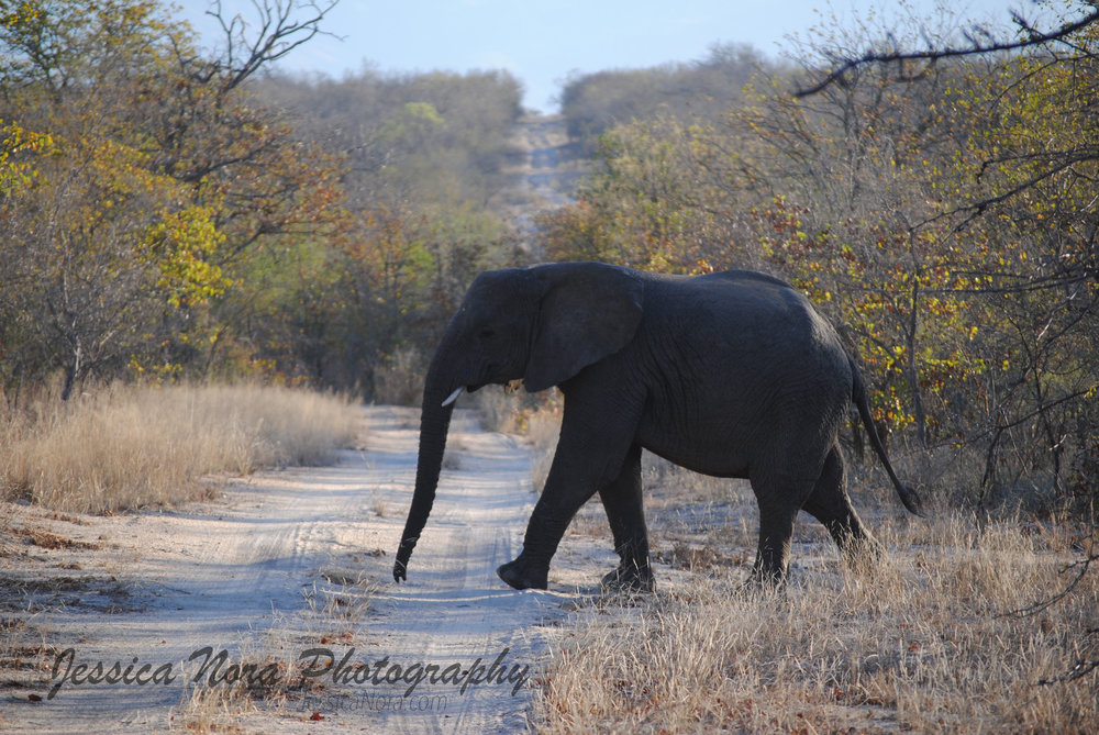 ElephantWM03.jpg