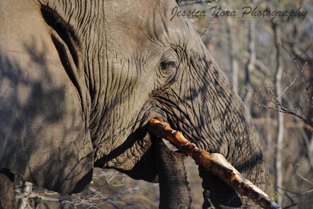 ElephantWM04.jpg