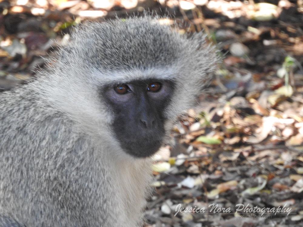 MonkeyWM02.jpg