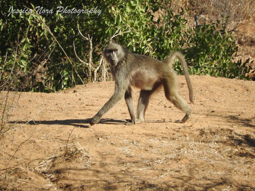 MonkeyWM04.jpg