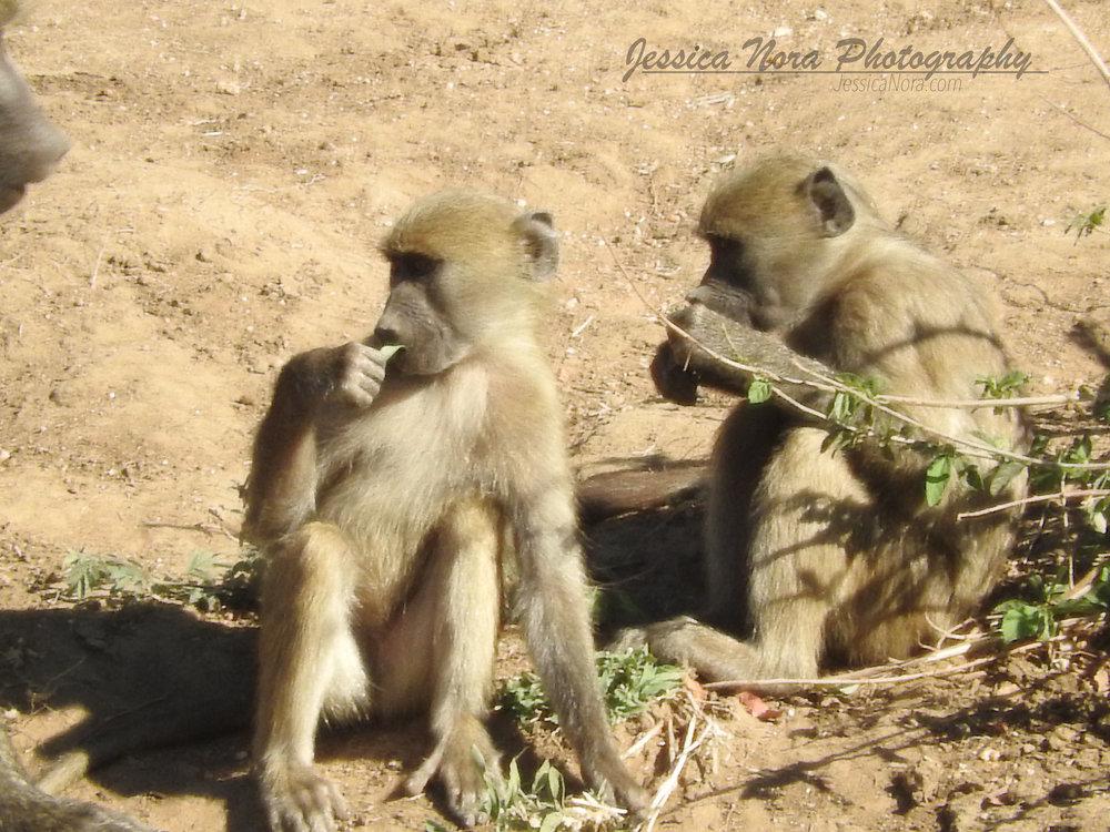 MonkeyWM05.jpg