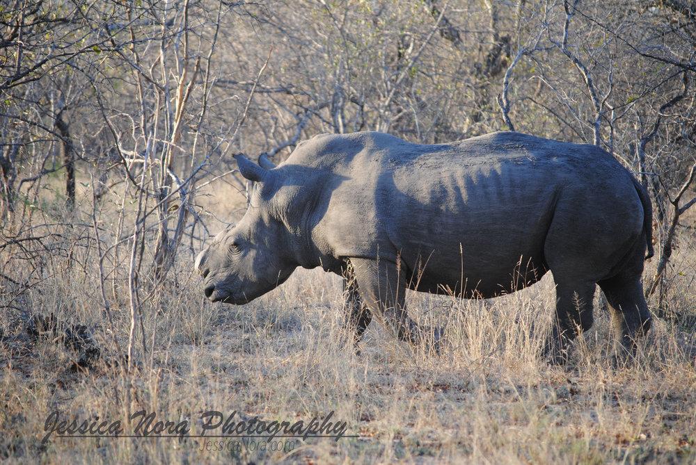 RhinoWM02.jpg