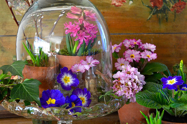 Spring Under Glass - Garden Ideas