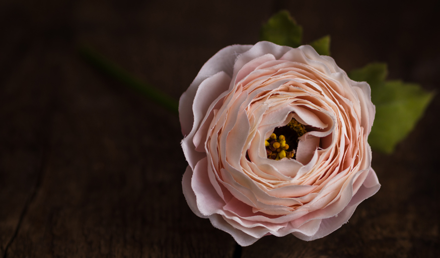 BE PRETTY IN PINK Dress your space with blush pink, beautiful ranunculus. Use it to add elegance on its own, in bunches, or in terrariums. Ranunculus Pale Pink, £5.50 per stem. www.wyldhome.com