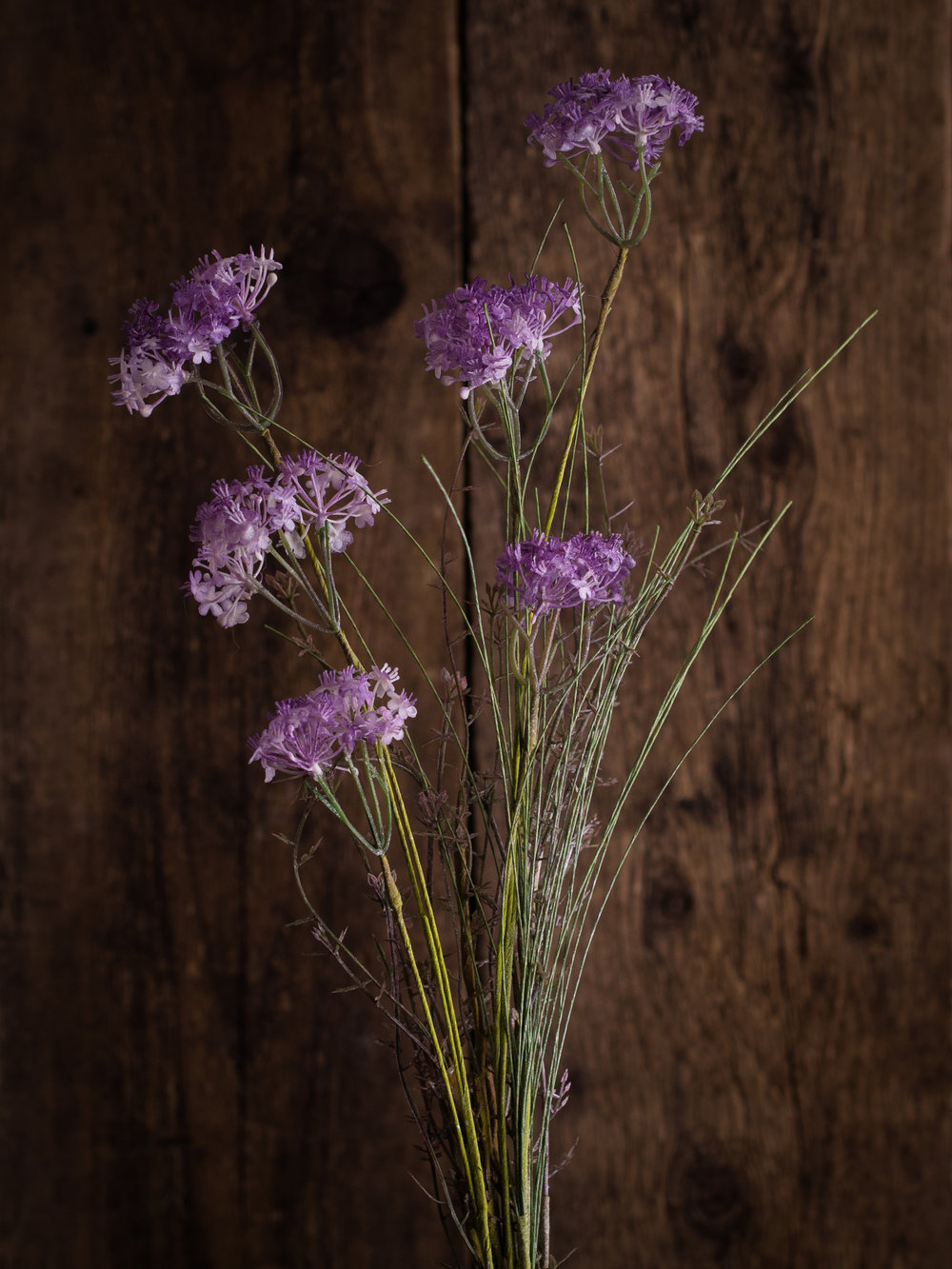 BE A SOFT TOUCH Opt for the delicate look of foraged meadow flowers to bring the outdoors in. Shady Meadow Flower, single stem, £6.75 www.wyldhome.com