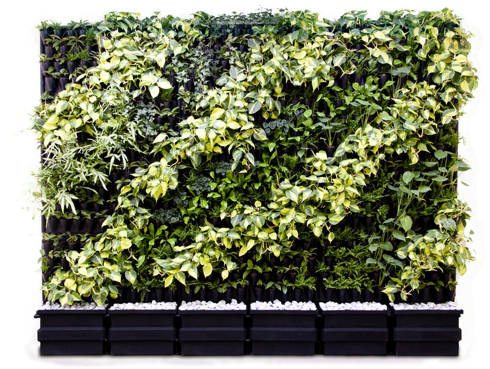 WATCH a video of a Modiwall Vertical Garden set up and demonstration  here !