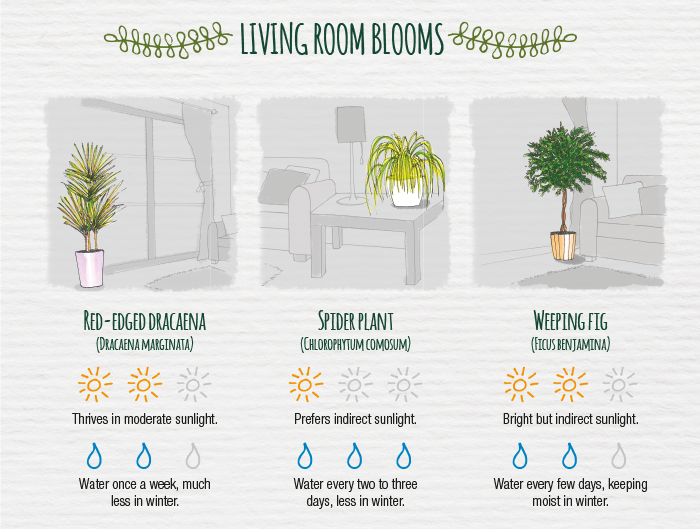indoor indirect sunlight plants you dont need green thumb to keeping plants indoors here are some easycare varieties and how look after them the indoor plant care cheat sheet modern gardens magazine